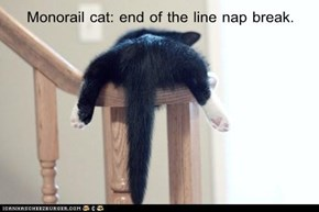 Monorail cat: end of the line nap break.