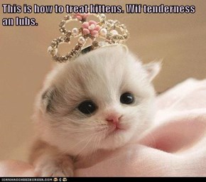 This is how to treat kittens. Wif tenderness an lubs.