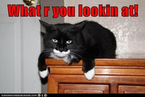 What r you lookin at!