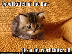 Cyoot Kitteh of the Day  It's a big world after all.