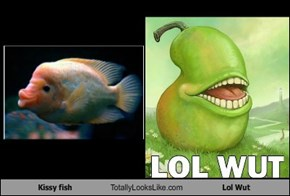 Kissy fish Totally Looks Like Lol Wut