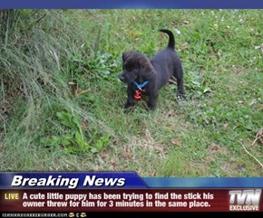 Breaking News - A cute little puppy has been trying to find the stick his owner threw for him for 3 minutes in the same place.
