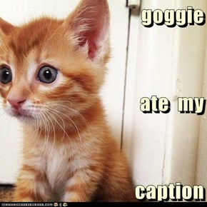 goggie ate  my caption