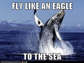 FLY LIKE AN EAGLE  TO THE SEA