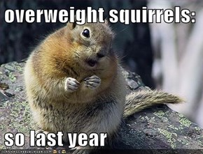 overweight squirrels:  so last year