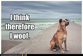 I think therefore I woof.