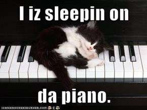 I iz sleepin on  da piano.
