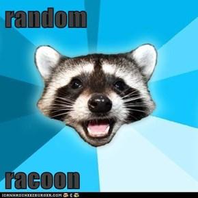 random   racoon