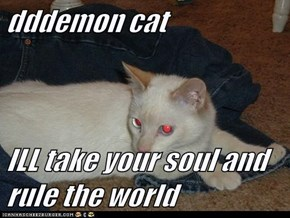 dddemon cat  ILL take your soul and rule the world