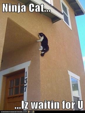 Ninja Cat...  ...Iz waitin for U