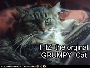 I is the orignal grumpy cat