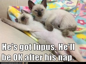 He's got lupus. He'll be OK after his nap.