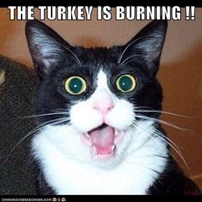 THE TURKEY IS BURNING !!