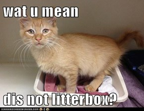 wat u mean  dis not litterbox?