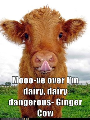 Mooo-ve over I'm dairy, dairy dangerous- Ginger Cow