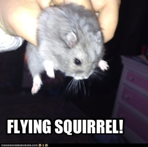 FLYING SQUIRREL!