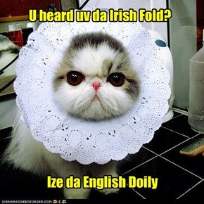 U heard uv da Irish Fold?