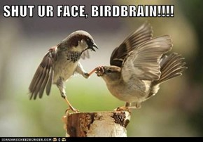 SHUT UR FACE, BIRDBRAIN!!!!