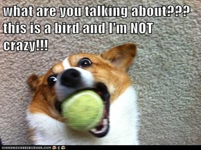 what are you talking about??? this is a bird and I'm NOT crazy!!!