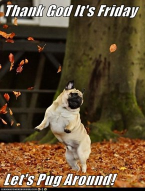 Thank God It's Friday   Let's Pug Around!