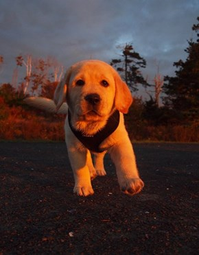 Cyoot Puppy ob teh Day: Sunrise