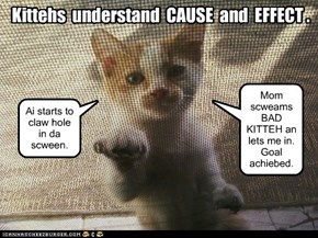 Kittehs  understand  CAUSE  and  EFFECT .