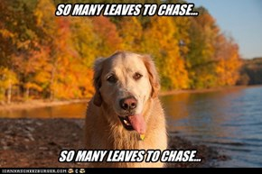 SO MANY LEAVES TO CHASE...