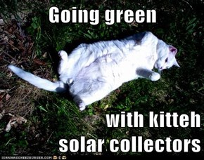 Going green  with kitteh                                         solar collectors