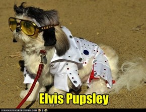 Elvis Pupsley