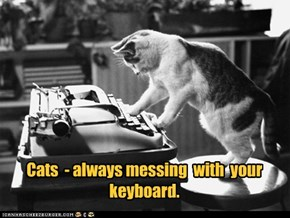 Cats  - always messing  with  your keyboard.