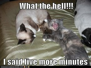 What the hell!!!   I said five more minutes