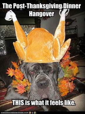 "A ""Turkey-Coma"" would be a relief."