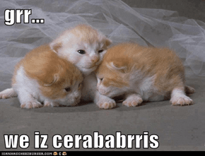 grr...  we iz cerababrris