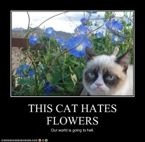 THIS CAT HATES FLOWERS