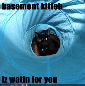 basement kitteh  iz watin for you