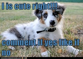 I is cute right!!!  comment if yes like if no
