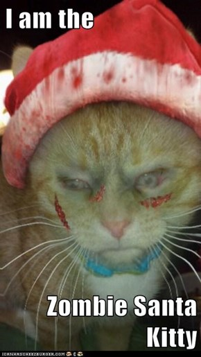 I am the  Zombie Santa Kitty