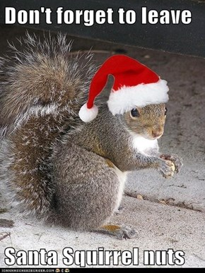 Don't forget to leave  Santa Squirrel nuts