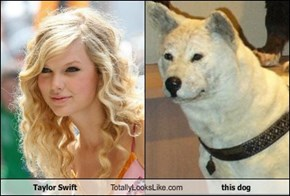 Taylor Swift Totally Looks Like this dog