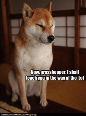 come, grasshopper