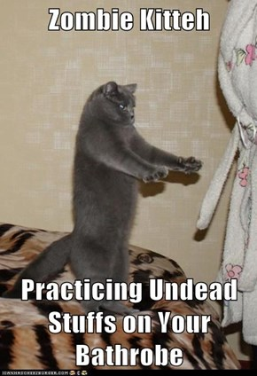 Zombie Kitteh  Practicing Undead Stuffs on Your Bathrobe