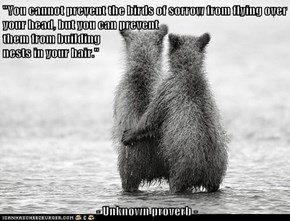 """""""You cannot prevent the birds of sorrow from flying over your head, but you can prevent                                                        them from building                                                                                    nests in y"""