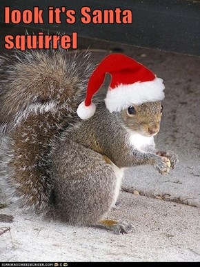 look it's Santa squirrel
