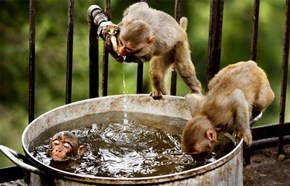 Monkey Bath Time
