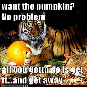 want the pumpkin? No problem  all you gotta do is get it...and get away