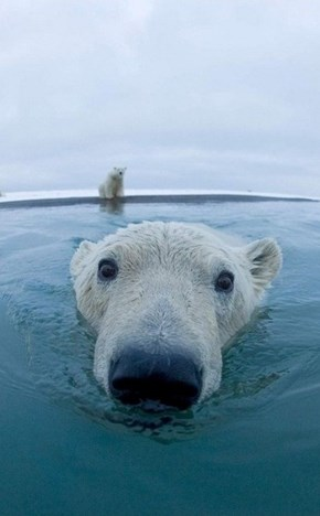 Up Close and Polar
