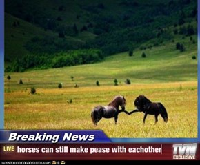 Breaking News - horses can still make pease with eachother