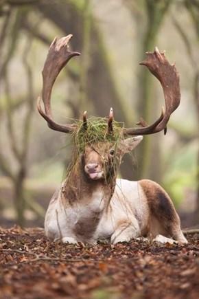 Caribou Bush