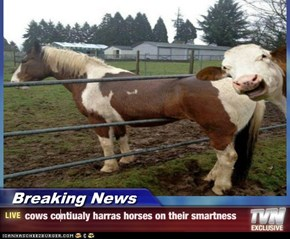 Breaking News - cows contiualy harras horses on their smartness