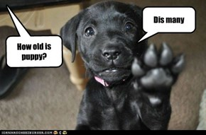 How old is Puppy?